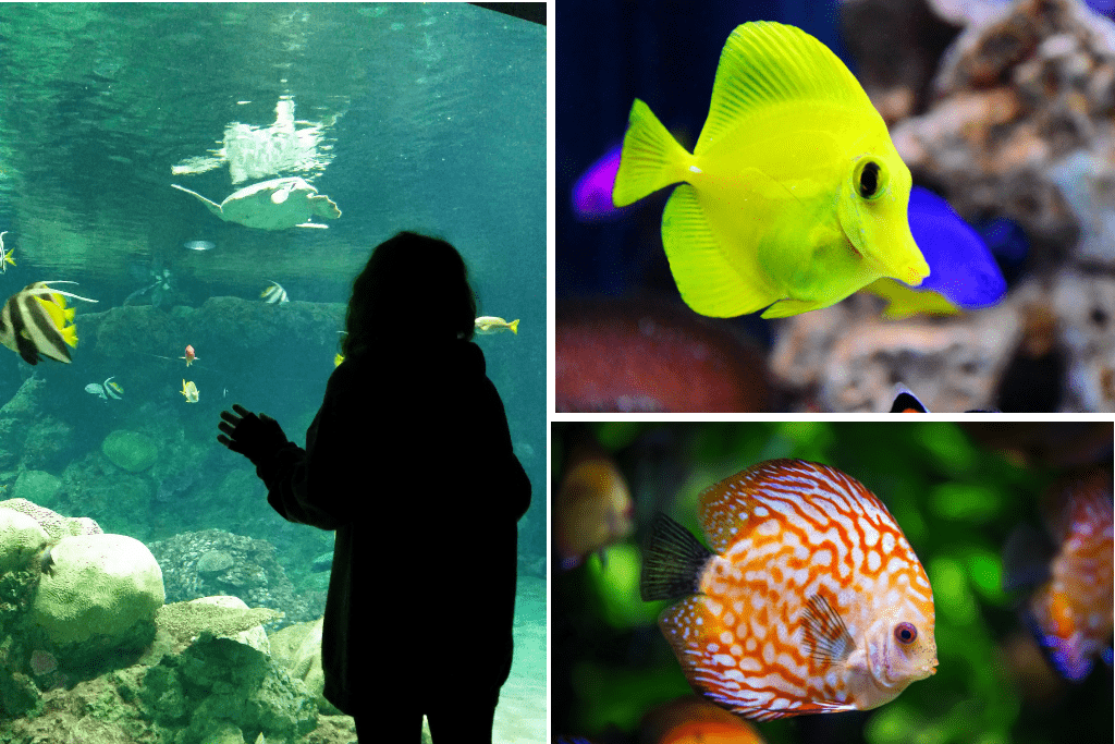 Ripley's Aquarium of the Smokies Gatlinburg