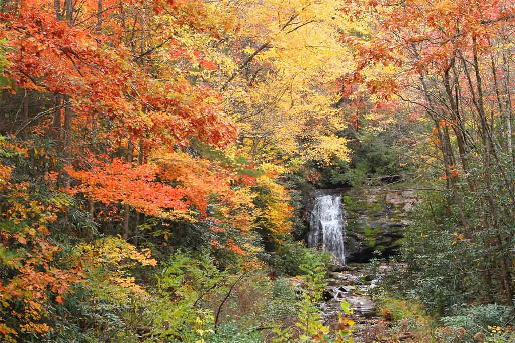 Great Smoky Mountains National Park fall colors, Great Smoky Mountains National Park fall foliage
