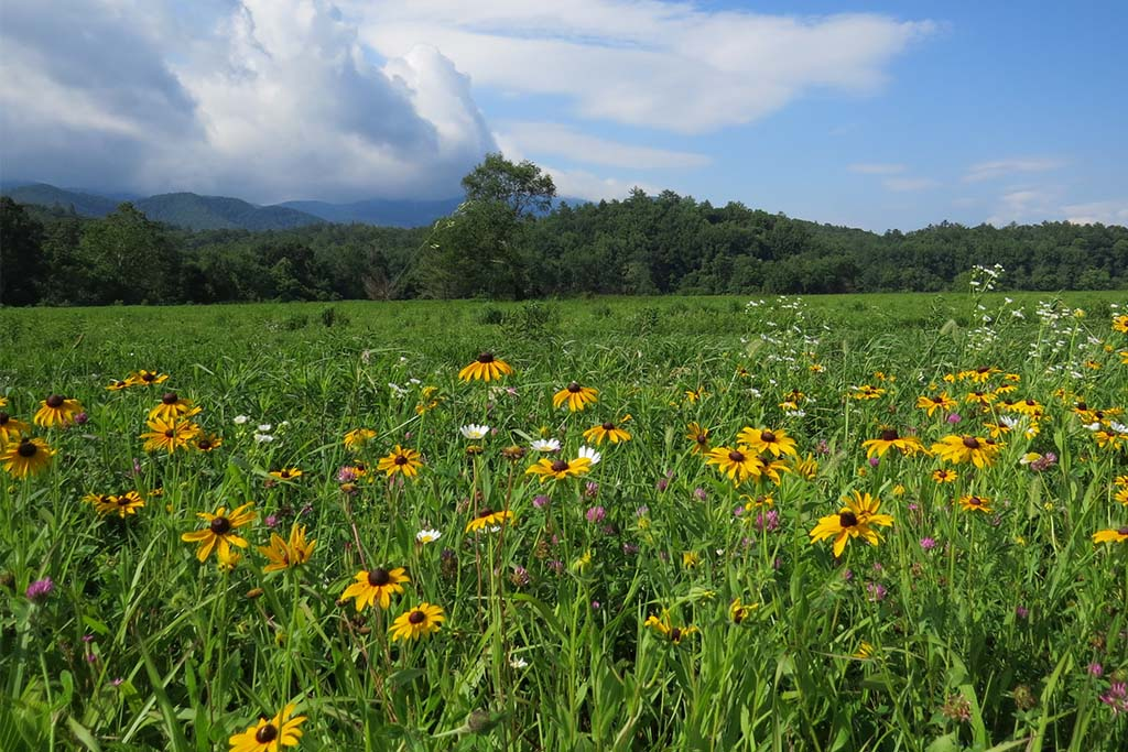 Spring Wildflowers in the Smoky Mountains