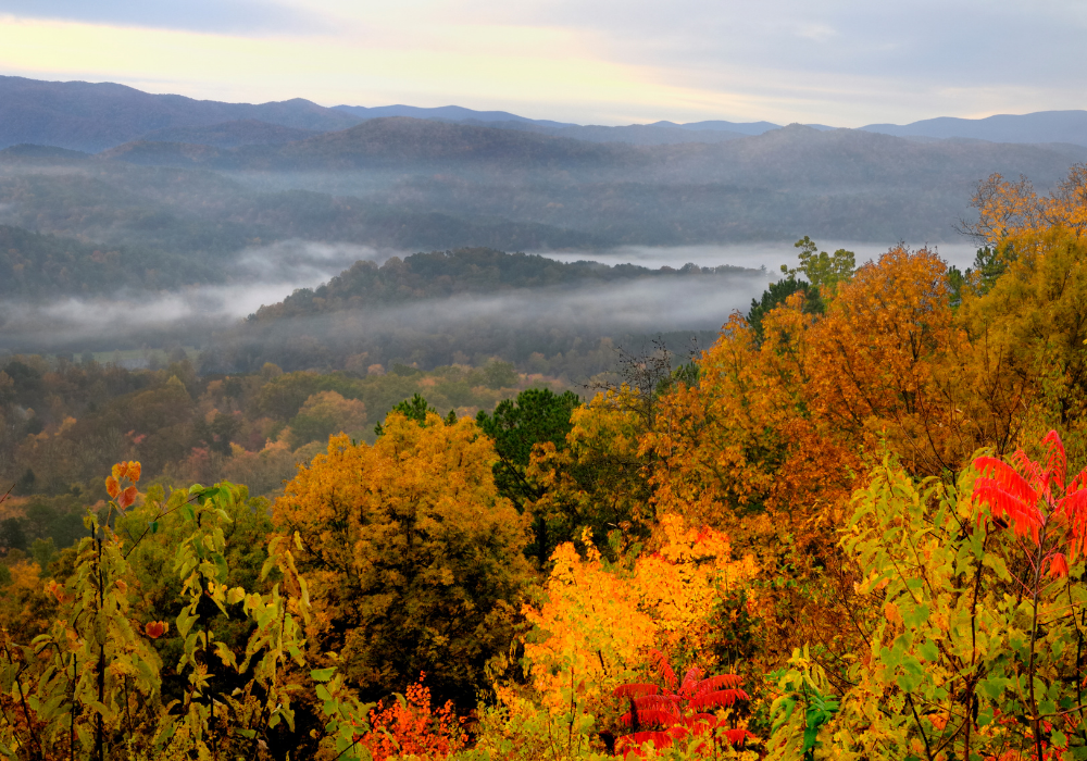 mountains with colorful leaves
